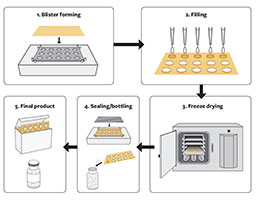 Illustration of the process of lyophilizing (freeze-drying) a drug or vaccine